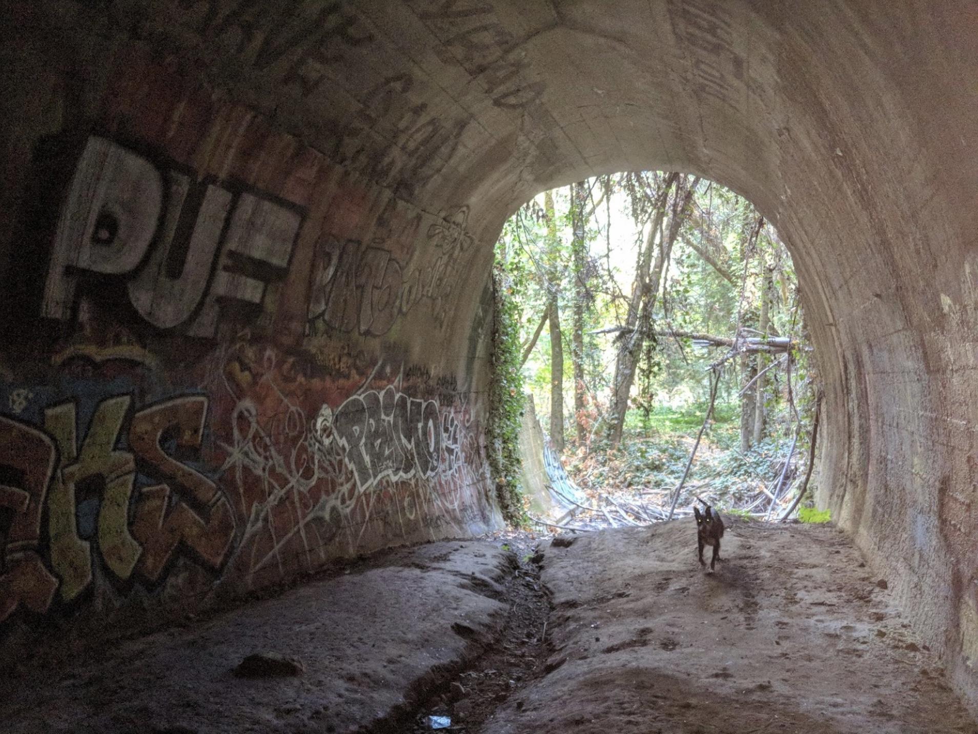 莱特隧道北洞口现状.jpeg